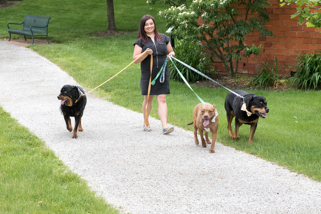 Bond with your dog through walking