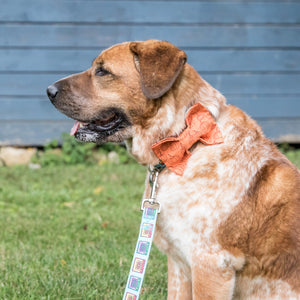 Rustic Pumpkin Dog Bow Tie