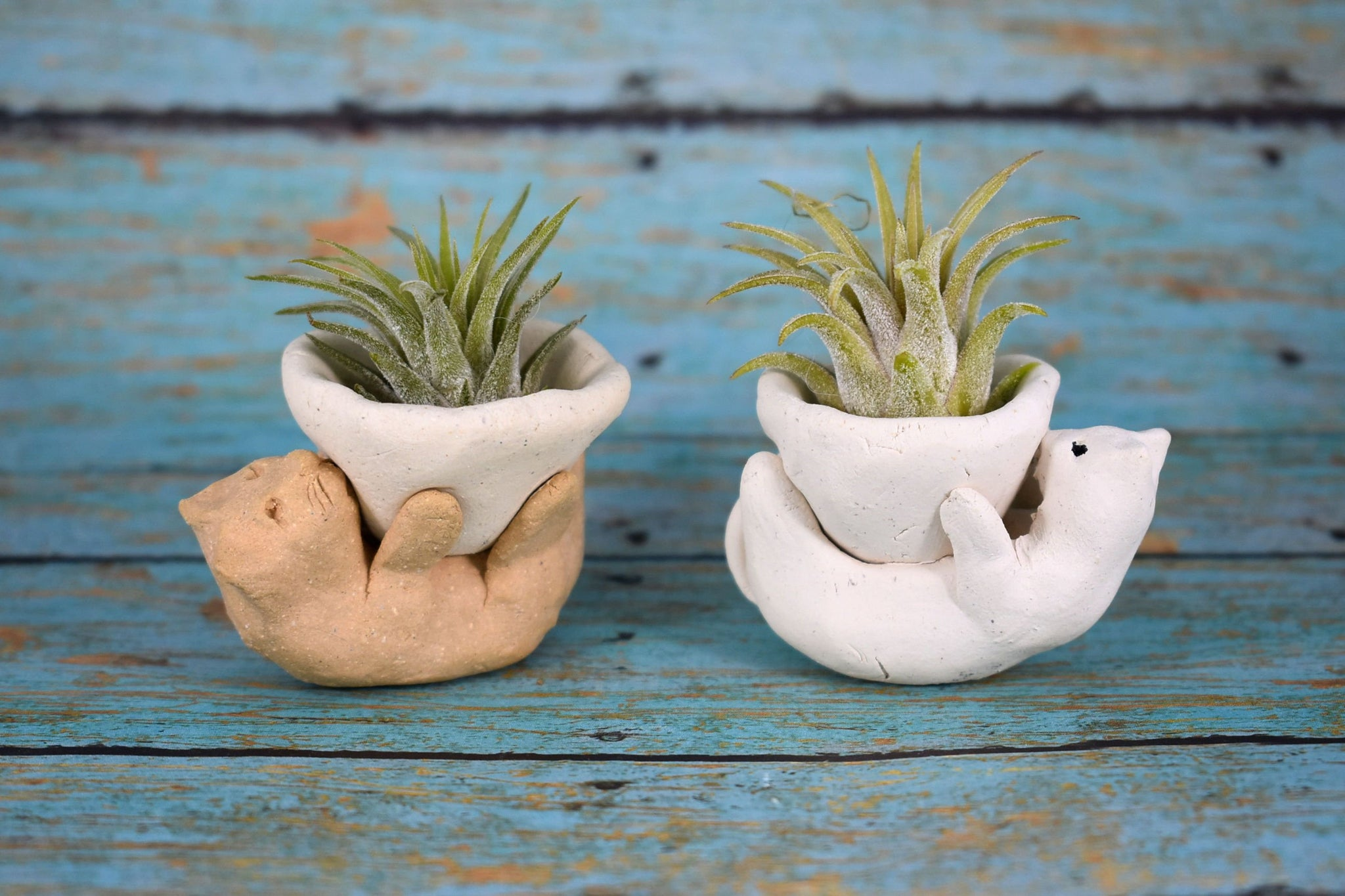 Playful Kitty Air Plant Holder