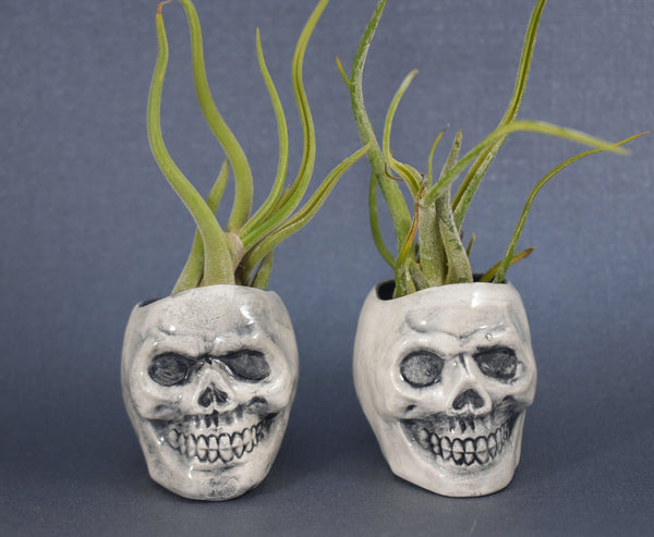 "Skull Air Plant Holder with ""Medusa"" air plant"