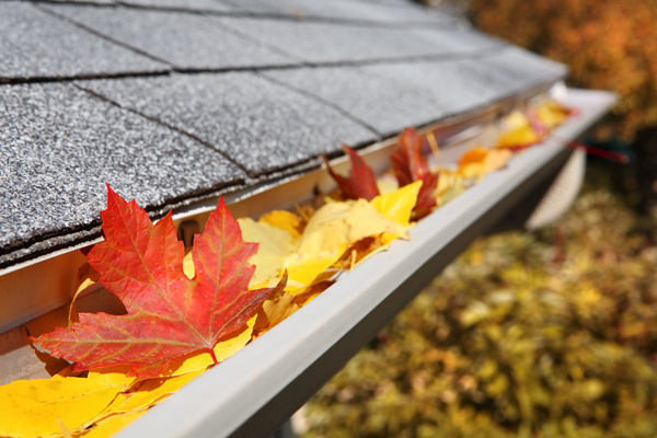 Rain gutter full of fall leaves