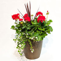 Large Geranium Patio Pot