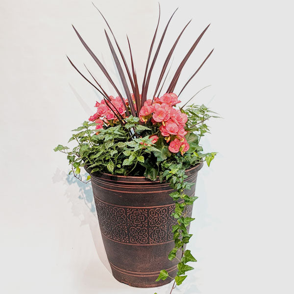 Large Begonia Combination Patio Pot