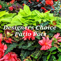 Designer's Choice Patio Pots