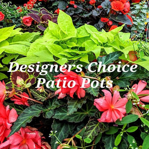 Designers Choice Patio Pots