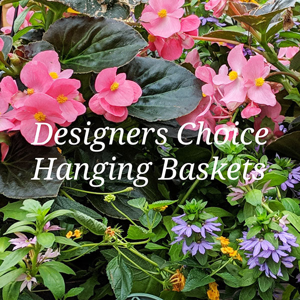 Designer's Choice Hanging Baskets