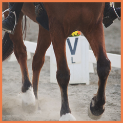 Dressage Olympic Eventing