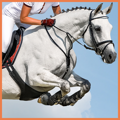 Olympic eventing showjumping