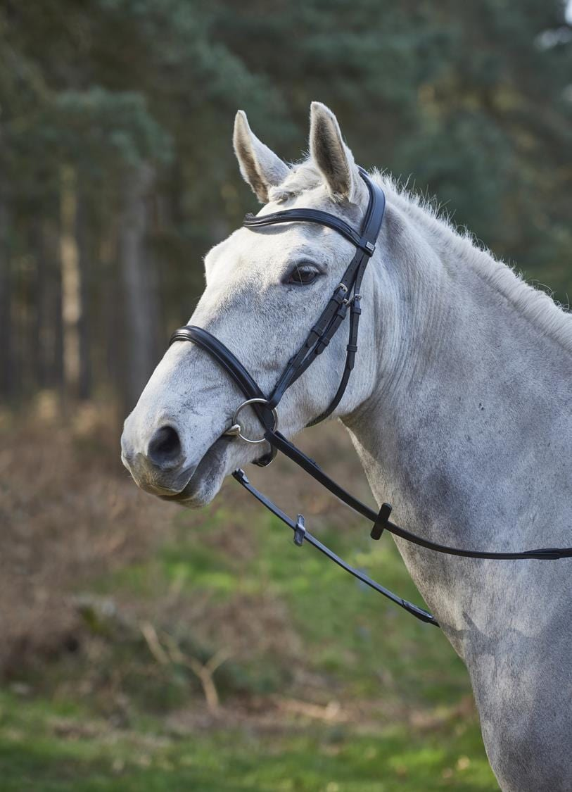 GFS Simplicity Bridle with Rubber Grip Reins