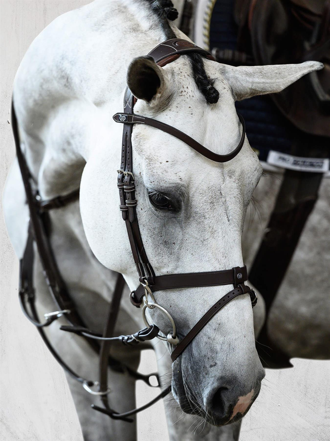 PS of Sweden London Limited Edition Bridle
