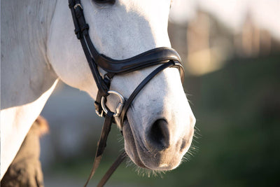 PS of Sweden Paladin Anatomic Flash Snaffle Bridle