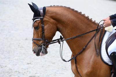 PS of Sweden Stockholm Limited Edition Bridle