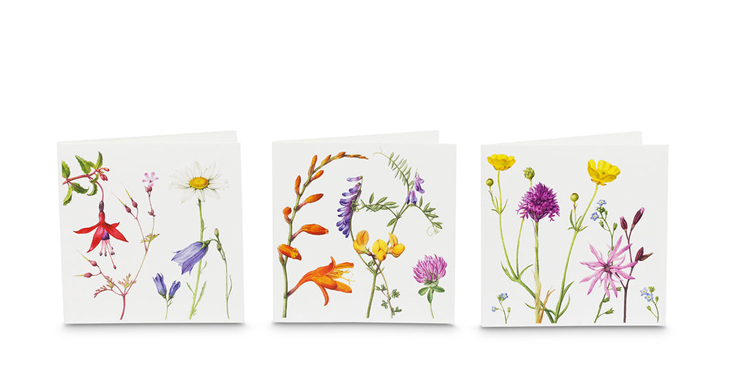 Holly Somerville - Set of six Atlantic Flora cards