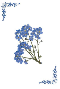 Pack of 4 blank inside (Forget-me-not - RPB 12)