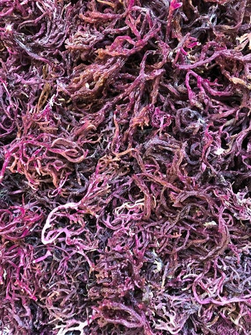 All Natural Wild Crafted Purple Sea Moss