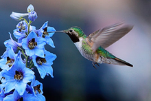 Load image into Gallery viewer, JumpSTART POLLINATORS' PARADISE Share