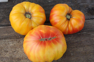 Live Tomato Plant: Ruby Gold (Heirloom)