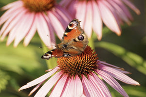 JumpSTART POLLINATORS' PARADISE Share