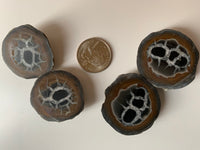 Septarian Nodules (Pair)