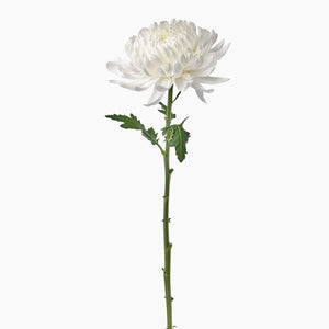 Open image in slideshow, White Chrysanthemums