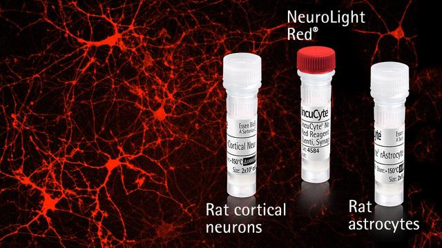 IncuCyte® NeuroPrime Red Kit