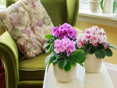 4 Plants to Grow in Your House for Winter