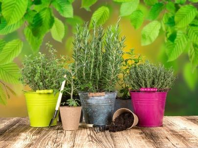 How to Grow a Simple Herb Garden Indoors