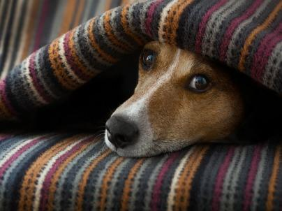 4 Ways to Make Fido More Comfortable When It's Cold Out