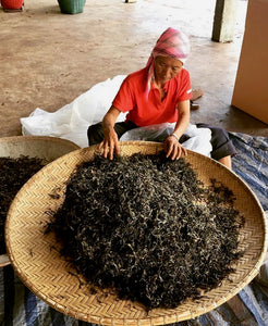 Thai farmer drying Assam leaves in Chiang Rai