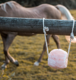 Himalayan Horse Lick with Hanging Rope