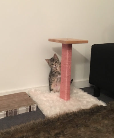 Baby Mila's first scratching post