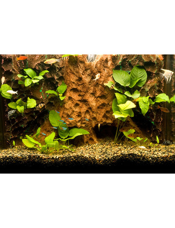 T-Rex Aquarium Decor - Tree Trunk Tropics Background - 10 Gallon