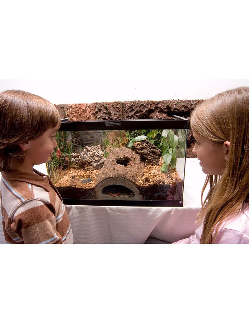 T-Rex Reptile Terrarium Decor - Rockview Caverns Hide
