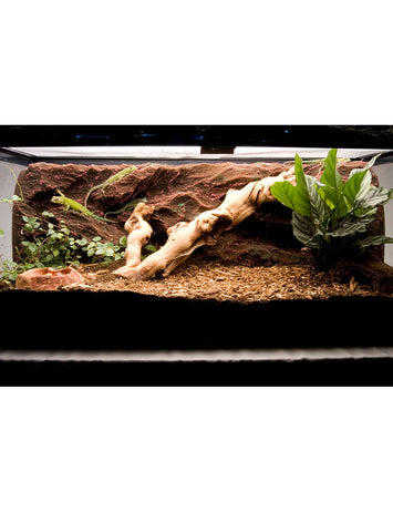 T-Rex Reptile Terrarium Decor -  Rock Ridge Background - 20 Gallon