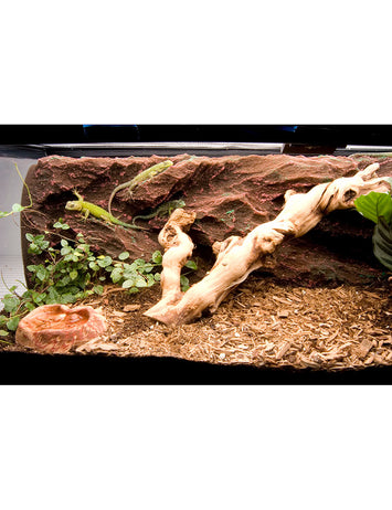 T-Rex Reptile Terrarium Decor -  Rock Ridge Background - 10 Gallon