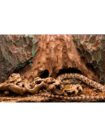 T-Rex Reptile Terrarium Decor -  Tree Trunk Tropics Background - 10 Gallon
