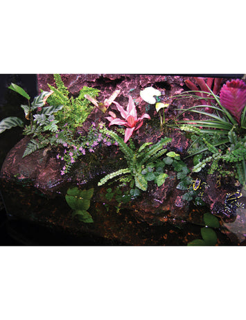 T-Rex Reptile Terrarrium Decor -  Rainforest Rapids