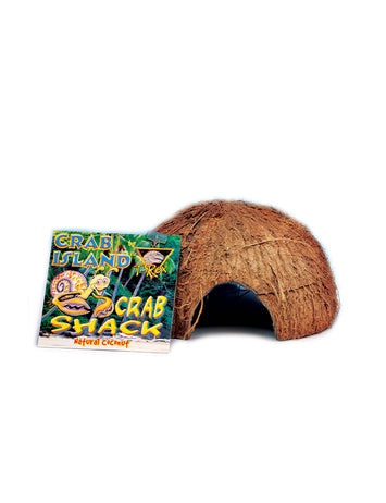 T-Rex Hermit Crab Accessory - Shack B157