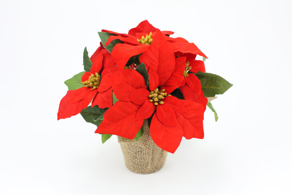 Potted Red Poinsettia