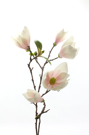Magnolia Tree Bud Cream Pink