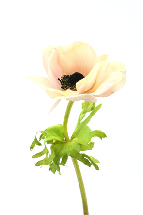 Anemone Real Touch Artificial Flower - Pink Green