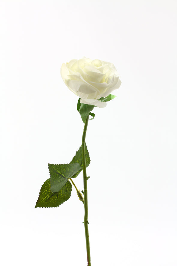 realistic white open rose stem