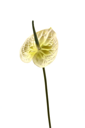 Anthurium Large Artificial Flower Stem - Cream 68cm Real Touch