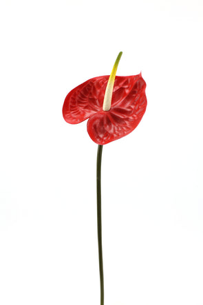 Anthurium Large Artificial Flower Stem - Red 68cm Real Touch