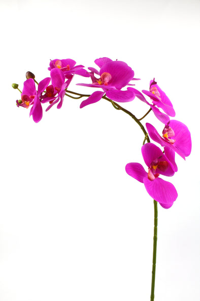 Phalaenopsis Orchid Spray Cerise 100cm Real Touch