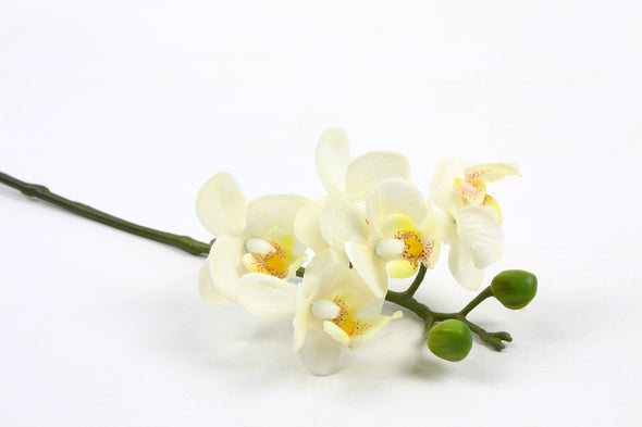 Mini Phalaenopsis Orchid Spray White 25cm Real Touch