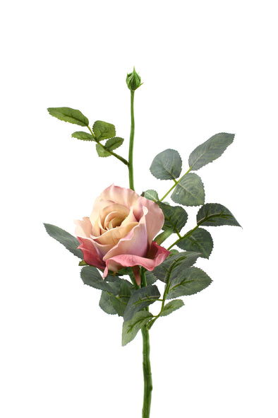 Realistic antique pink alice rose stem