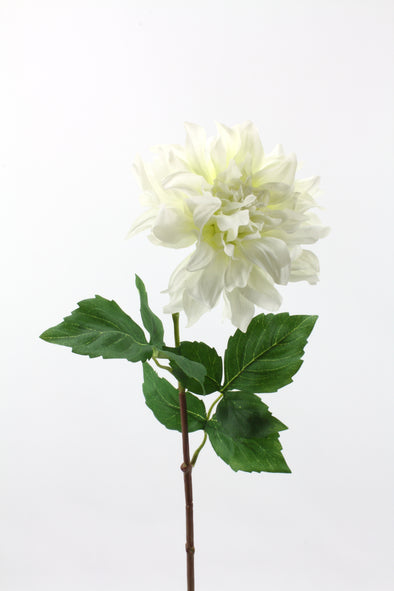 Dahlia Large Flower With Curl Petals White 62cm