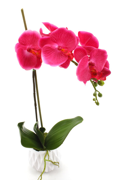 fuchsia real touch orchid arrangement