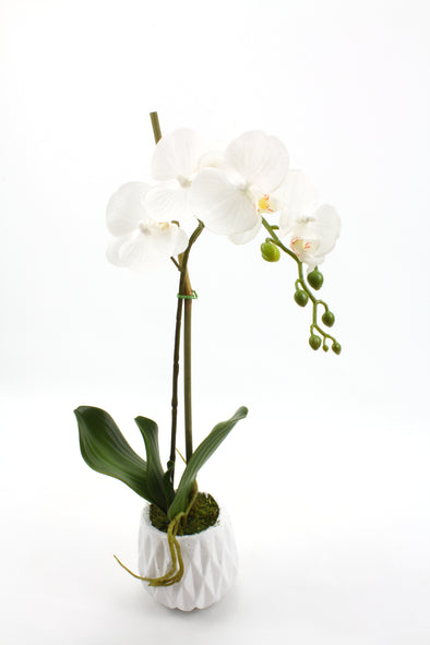 *SOLD OUT* White Phalaenopsis Orchid In White Vase - Real Touch Artificial Flower Arrangement